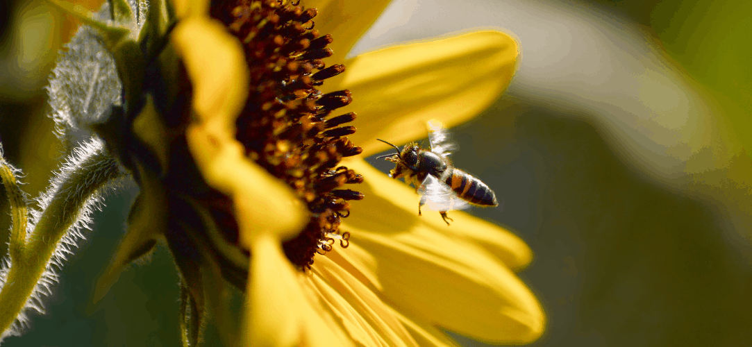 OnePlus-7-Pro-Wallpapers-Never-Settle-Bee