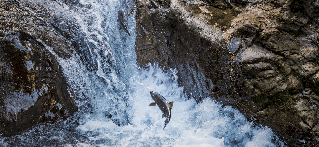 OnePlus-7-Pro-Wallpapers-Never-Settle-Salmon