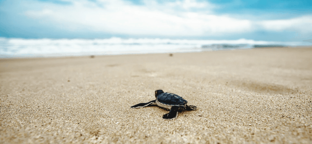 OnePlus-7-Pro-Wallpapers-Never-Settle-Turtle